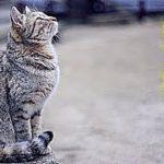 不思議 心温まる話・本当にあった猫の恩返し・招き猫ちゃんねる