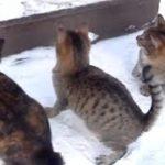 面白い猫、爆笑ネコ動画、おもしろ猫動画 の攻撃と面白い好奇心かわいい子猫  面白い猫 面白い猫。猫 おもしろ