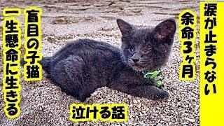 感動 涙が止まらない・余命数ヶ月の盲目の子猫に幸せな最期を!最愛の飼い主さんと共に、残された時間を精一杯楽しむ姿に涙が止まらない・招き猫ちゃんねる