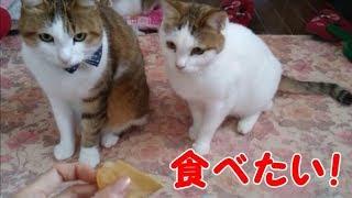 ポテチが食べたくて仕方ない食いしん坊の猫たちが可愛い・・・うちの猫ちゃんたちカワイイTV