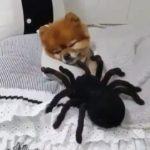 「面白い動物」あり得ないことをする犬, 猫・おもしろ犬, 猫のハプニング, 失敗集 #182