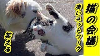 【猫おもしろ】猫の集会-野良猫達のネットワーク恐るべし【泣ける話 感動 動物 猫】動画 里親・招き猫ちゃんねる