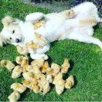 「面白い動物」あり得ないことをする犬, 猫・おもしろ犬, 猫のハプニング, 失敗集 #151