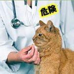 危険・猫が低体温になっている時の5つの症状、猫の平熱38度・心拍数は1分間に140~220回です・ゆっくり猫動画・招き猫ちゃんねる