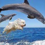 「面白い動物」あり得ないことをする犬, 猫・おもしろ犬, 猫のハプニング, 失敗集 #166