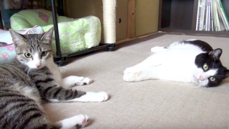 同時にビックリする猫