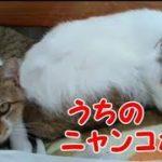 かわいい猫 うちのニャンコたち・・・うちの猫ちゃんたちカワイイTV