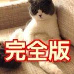 驚くほど猫がホイホイする、猫転送装置の作り方 人類はとんでもない物を発明してしまった。Trick your cat with a circle 完全版