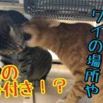 ヒーターをめぐる猫たちのかわいい熱き戦い!