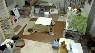 保護猫ハウス信州猫日和 ねこみてってー