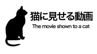 【ネコ用】猫に見せる動画   The video for Cats Only    【Cat Games】