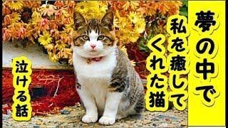 【猫 泣ける話】愛猫が天に召されました・逝ったあの子が私を癒してくれた話(猫 感動 泣ける話 保護 涙腺崩壊 感涙 動物 動画 里親)招き猫ちゃんねる