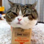 箱とねこ24。-Box and Maru 24.-
