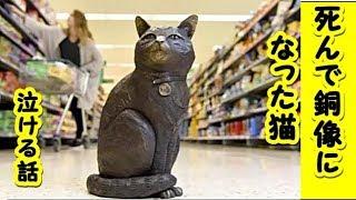 【猫 感動 泣ける話】スーパーマーケットを自主警護していた名物猫が永眠、その姿を残すべく銅像が設置される【保護 泣ける話 感動 動物 猫】動画 里親・招き猫ちゃんねる