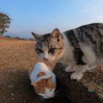 池の畔を散歩する野良猫子猫がカワイイ