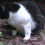 「野良猫」白黒親子のびっくり猫、ねこおばさんをまってます。