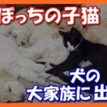 【感動する話泣ける話】愛情には犬猫の壁はない!!