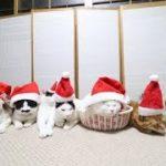 7匹のサンタ猫 Santa Claus CAT 2018