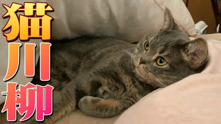 毎朝の猫のルーティンで猫川柳やってみた!