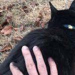 腰トントンしたら眠くなっちゃった黒猫。可愛い猫動画