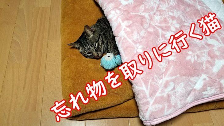 【忘れ物】忘れ物を取りに行く猫が凄い!The cat that goes to get something left is amazing!