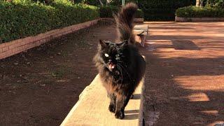猫の鳴き声は猫を呼ぶ。可愛い猫動画