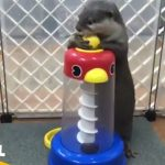 カワウソの赤ちゃんが遊ぶ姿超カワイイwww【Video Pizza】