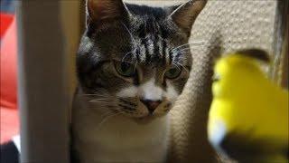 箱に入った猫と遊ぶと超楽しい!小窓からいろんなものが出てくるのをびっくり眼で見る猫リキちゃん【リキちゃんねる 猫動画】Cat video キジトラ猫との暮らし