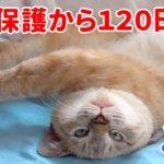 【子猫成長まとめ】小さい保護猫がワガママな甘えん坊に成長しました