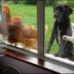 「面白い動物」あり得ないことをする犬, 猫・おもしろ犬, 猫のハプニング, 失敗集 #183