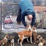 「面白い動物」あり得ないことをする犬, 猫・おもしろ犬, 猫のハプニング, 失敗集 #189