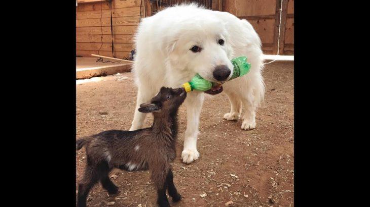 「面白い動物」あり得ないことをする犬, 猫・おもしろ犬, 猫のハプニング, 失敗集 #186