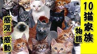 【感動 泣ける話】猫10匹家族の物語・猫って本当に優しいし泣かせるよ人間なんかよりずっと良い奴らだよマジで!(猫 感動 泣ける話 保護 涙腺崩壊 感涙 動物 動画 里親)招き猫ちゃんねる
