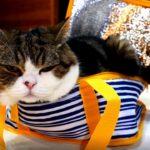 保冷バッグとねこ。-The cooler bag and Maru.-