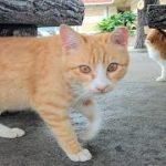 猫の集会所の子猫がやんちゃ過ぎた
