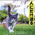 ゆっくり猫動画・猫が好きな人にだけ送る12のサイン・招き猫ちゃんねる