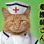 【猫 泣ける話】猫の看護師さん・亡き猫が会わせてくれた健気な猫の泣ける話(猫 感動 泣ける話 保護 涙腺崩壊 感涙 動物 動画 里親)招き猫ちゃんねる