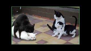 「面白い動物」あり得ないことをする犬, 猫・おもしろ犬, 猫のハプニング, 失敗集 #184