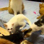 ねこ猫ネコ何匹いる?