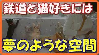 【感動する話泣ける話】養老鉄道が保護猫のために猫カフェ列車を運行!!