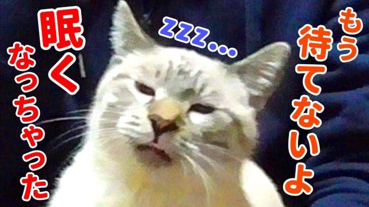 飼い主を待ってたら眠くなっちゃった猫がかわいすぎる