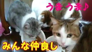 雨の日もお部屋で暖か♪ 仲良し親子 かわいい猫・・・うちの猫ちゃんたちカワイイTV