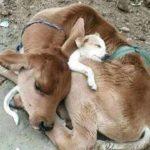「面白い動物」あり得ないことをする犬, 猫・おもしろ犬, 猫のハプニング, 失敗集 #188