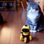 フォロとねこ。-Assembly robot and Maru&hana.-