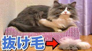 長毛の猫の抜け毛が尋常じゃない量!笑