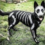「面白い動物」あり得ないことをする犬, 猫・おもしろ犬, 猫のハプニング, 失敗集 #160