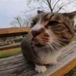 舌をしまい忘れている野良猫、得意技は頭突き!