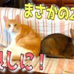 ロビンと一緒に寝る猫にビックリ!まさかの2人が仲良しに…!?