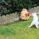 「面白い動物」あり得ないことをする犬, 猫・おもしろ犬, 猫のハプニング, 失敗集 #226