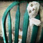 「絶対笑う」最高におもしろ犬,猫,動物のハプニング, 失敗画像集 555